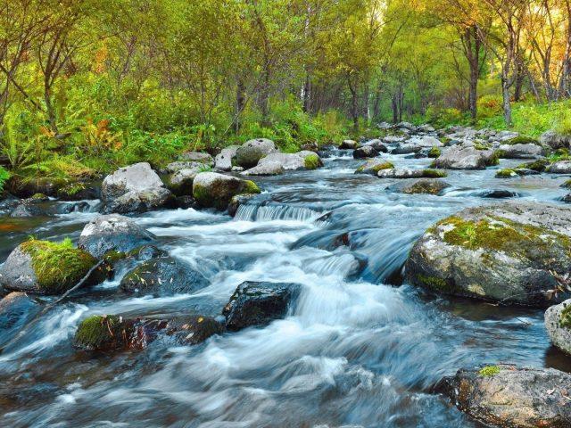 Водопады поток летом прозрачные покрытые водорослями скалы на реке деревья папоротниковый лес природа