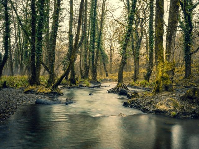 Лес река деревья