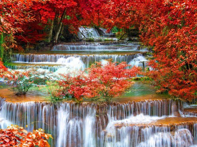 Водопадный ручей между красными осенними листьями деревьев в джунглях природы