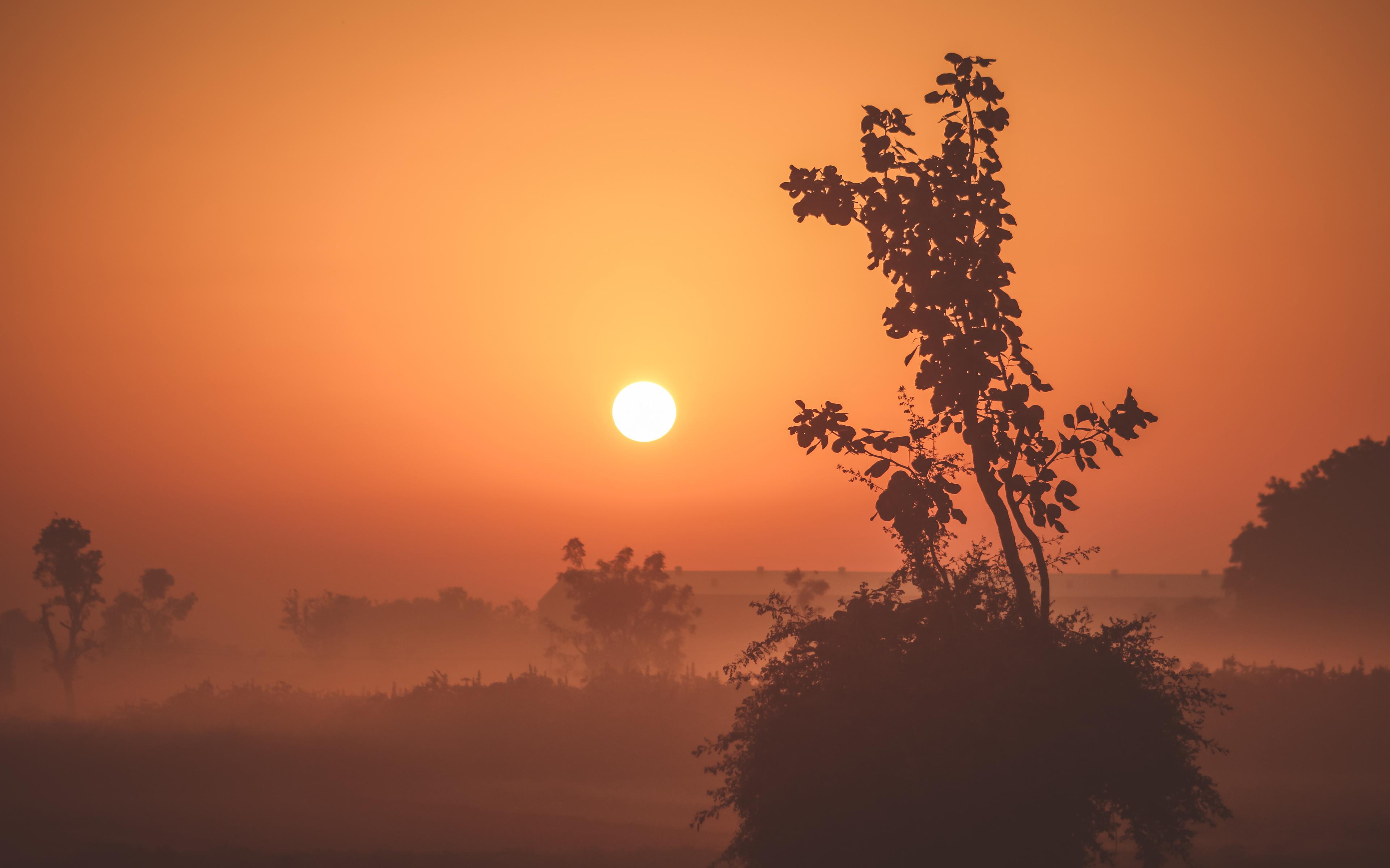 Туманный восход солнца обои скачать