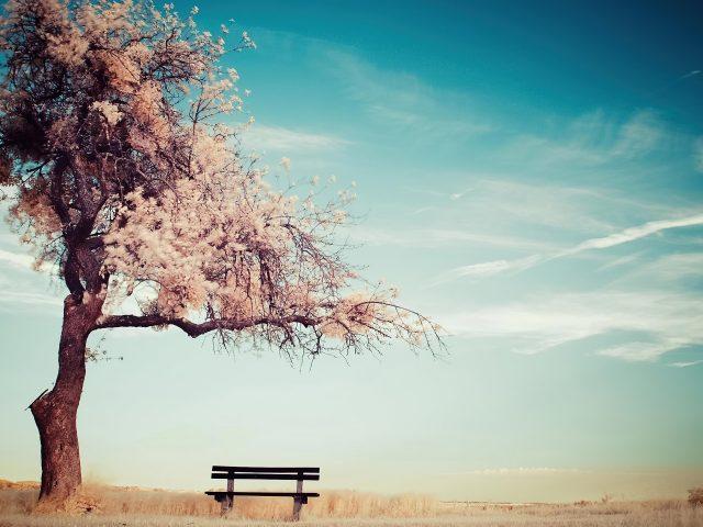 Ясное голубое небо под зимним деревом скамейка природа