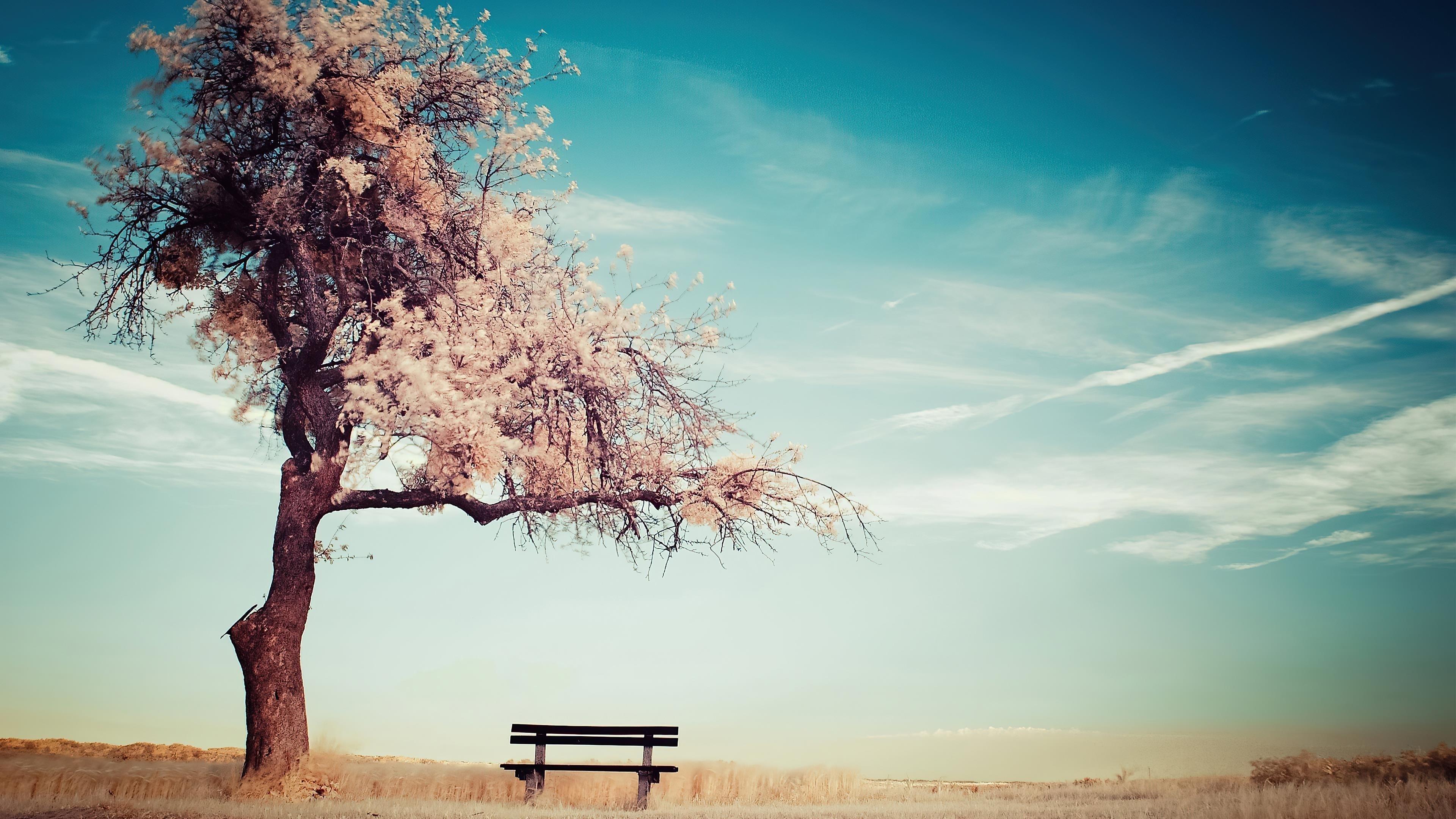 Ясное голубое небо под зимним деревом скамейка природа обои скачать