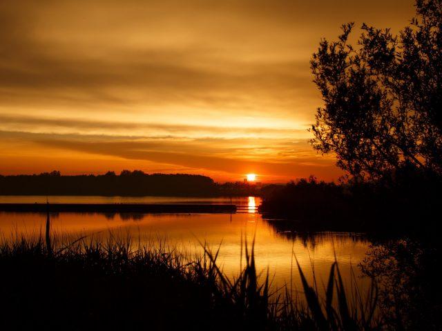 Закат дерево горизонт