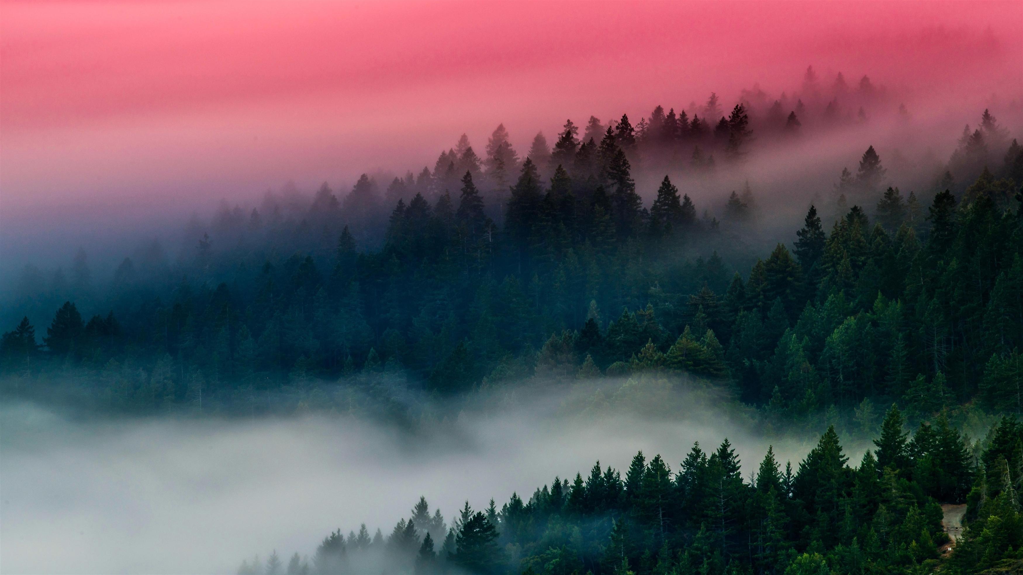 Туманный лес обои скачать