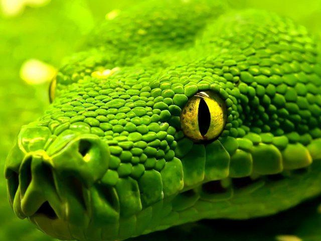 Змеиный глаз