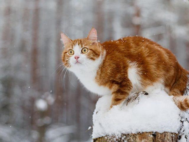 Желтые глаза коричнево-белый кот со звездным взглядом сидит на стволе дерева со снежным котом