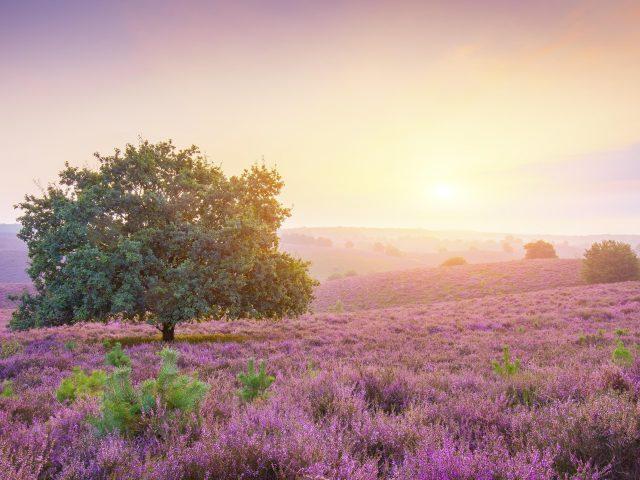 Фиолетовый пейзаж восход солнца