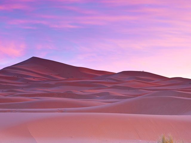 Пальмы пустыне сахара, Марокко.