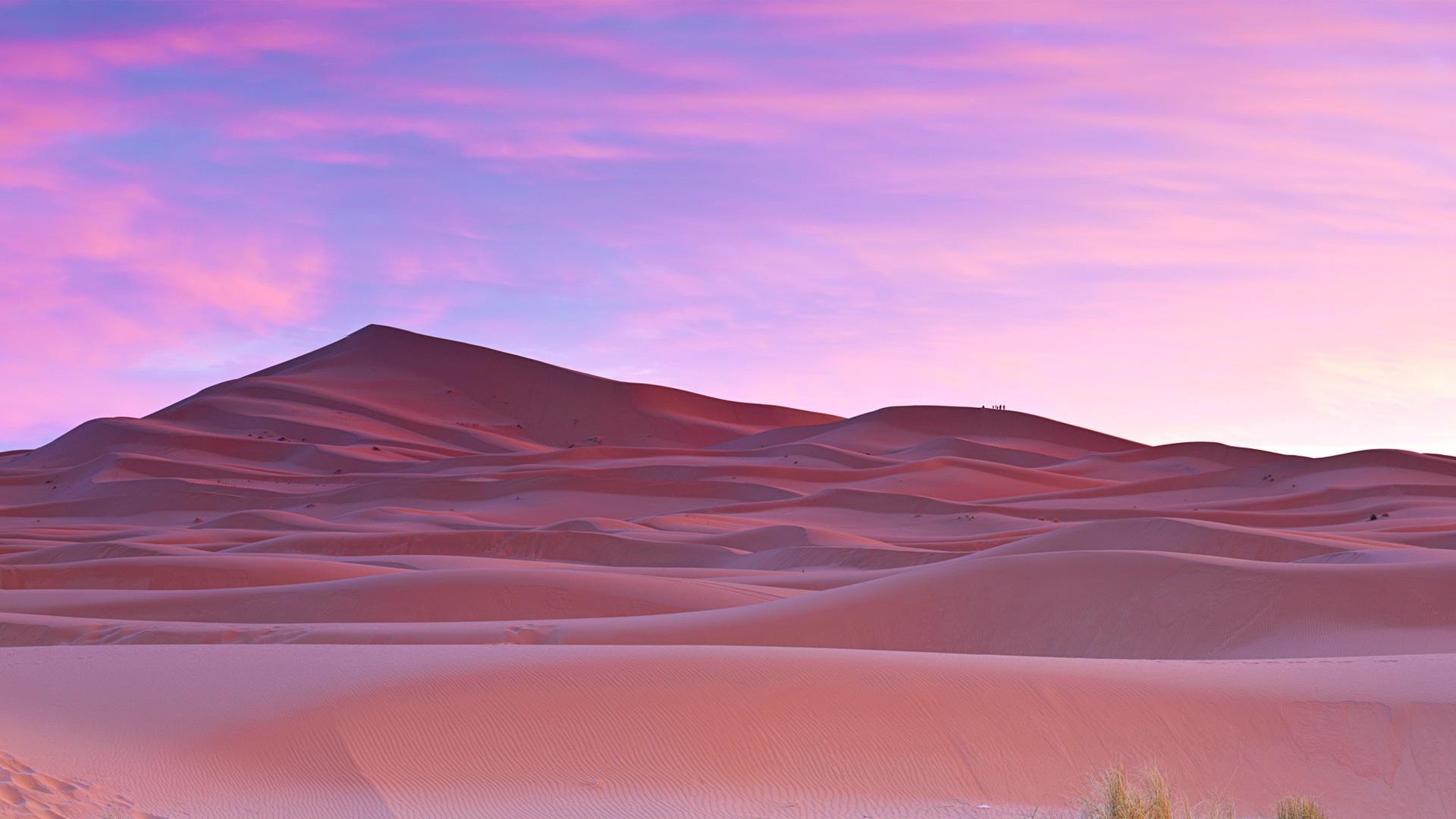 Пальмы пустыне сахара, Марокко. обои скачать