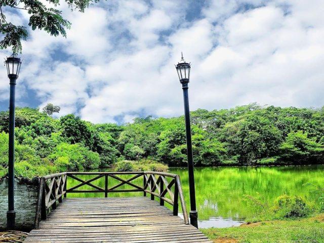 Деревянный причал перед водой зеленые деревья отражение на озере под белыми облаками пейзаж неба