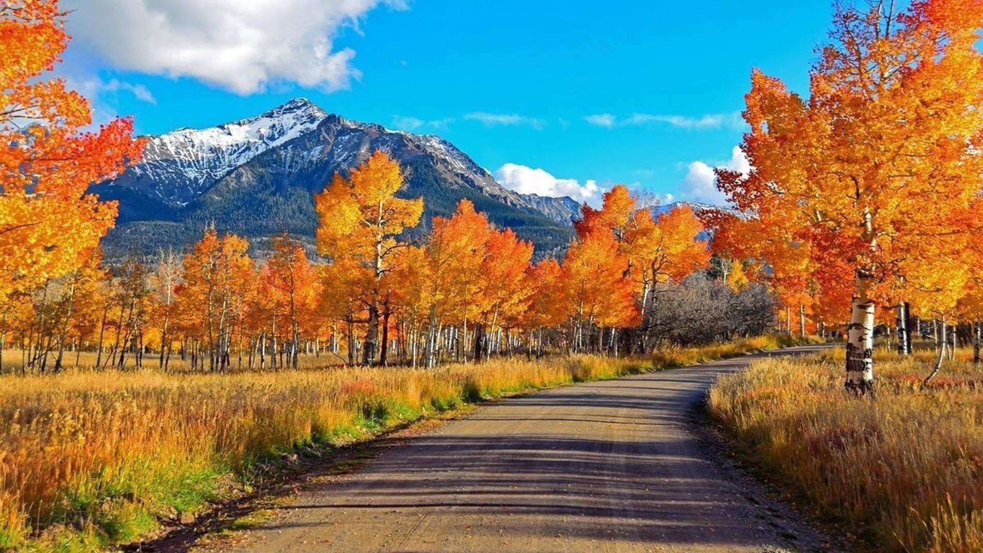 Дорога между желто оранжевыми осенними деревьями и пейзажем белой покрытой горы под белым голубым небом природа обои скачать