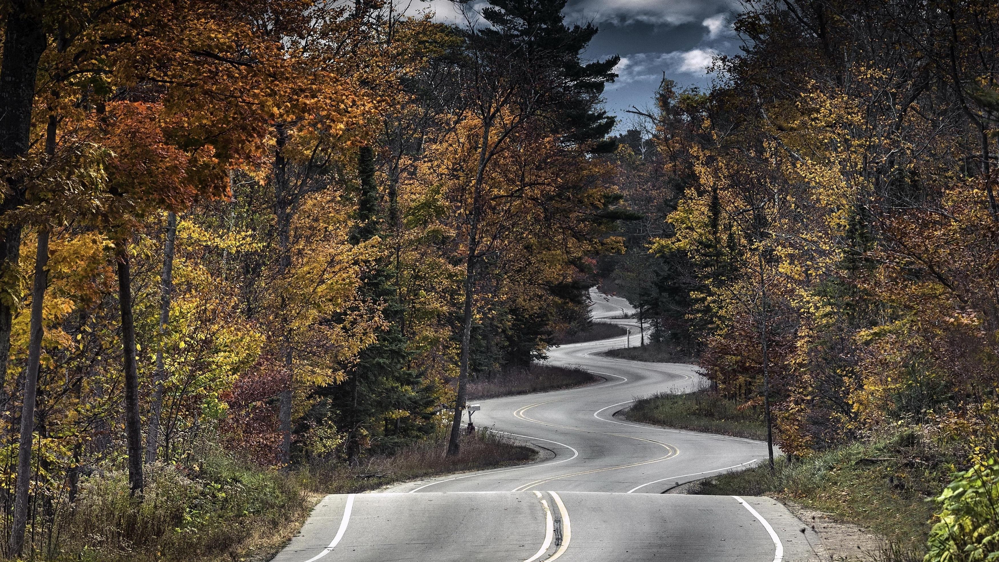 Дорожные деревья обои скачать