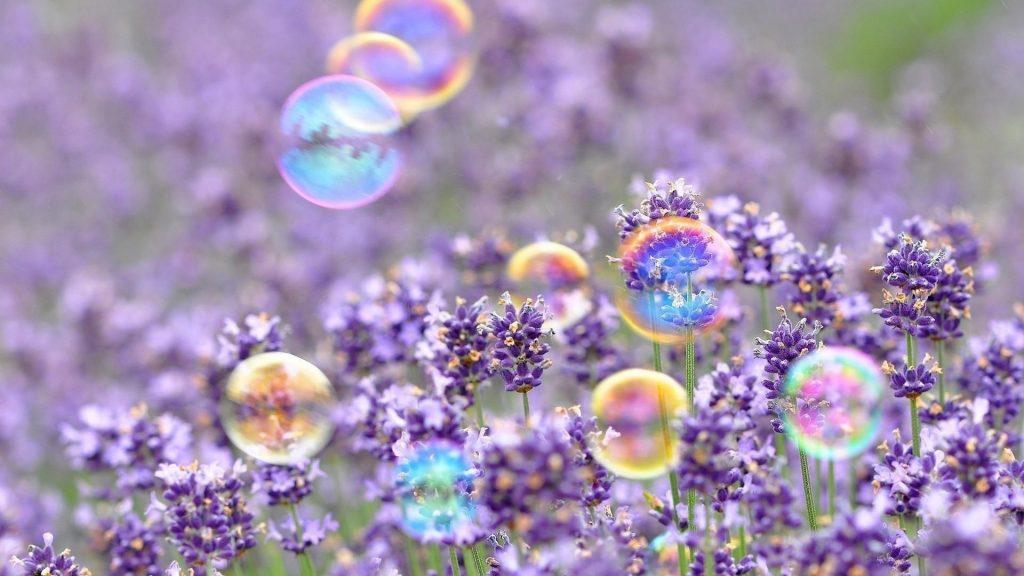 Фиолетовые цветы с пузырьками цветов обои скачать