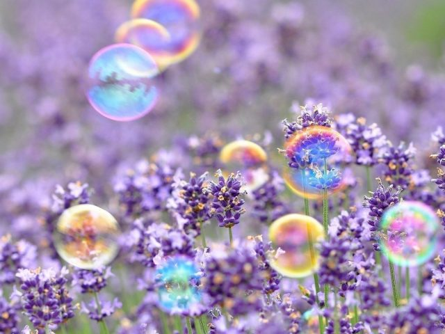 Фиолетовые цветы с пузырьками цветов