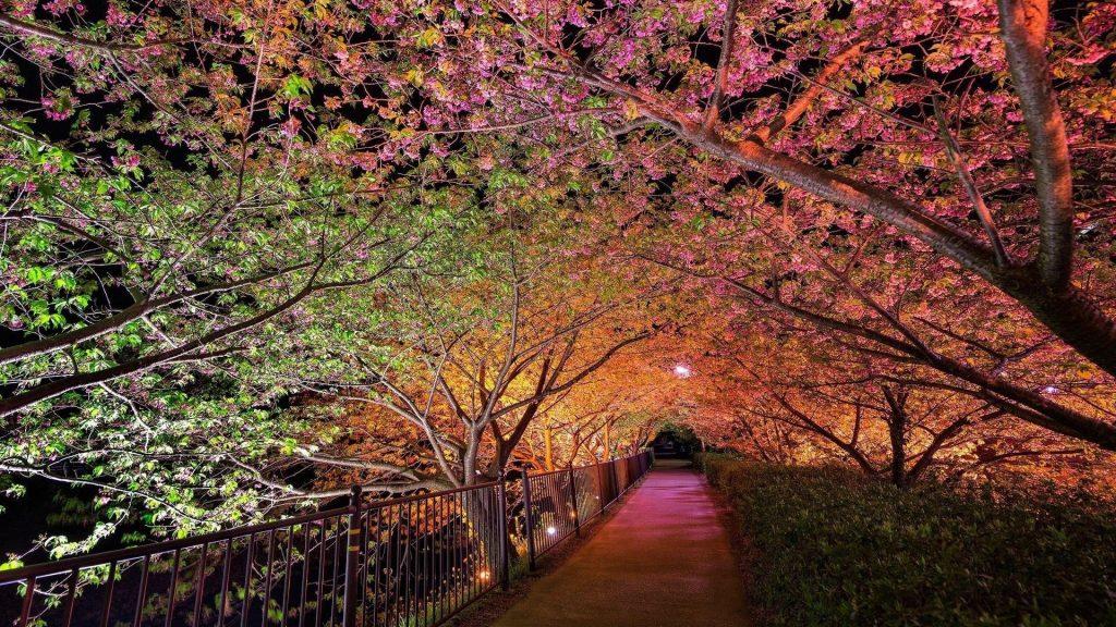 Красивая ночь весна парк аллея огни природа обои скачать