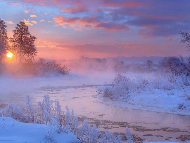 Река между замерзшими растениями и деревьями во время восхода солнца природа