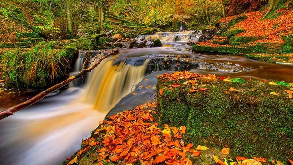 Водопадный ручей между покрытыми водорослями скалами с разноцветными сухими листьями природа обои скачать