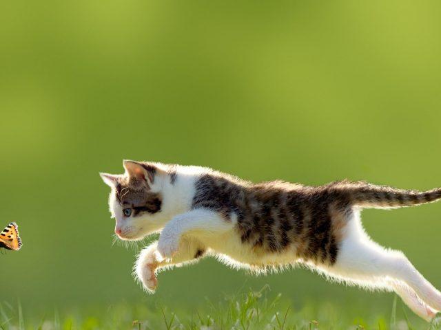 Белый и черный полосатый котенок кошка ребенок животные природа