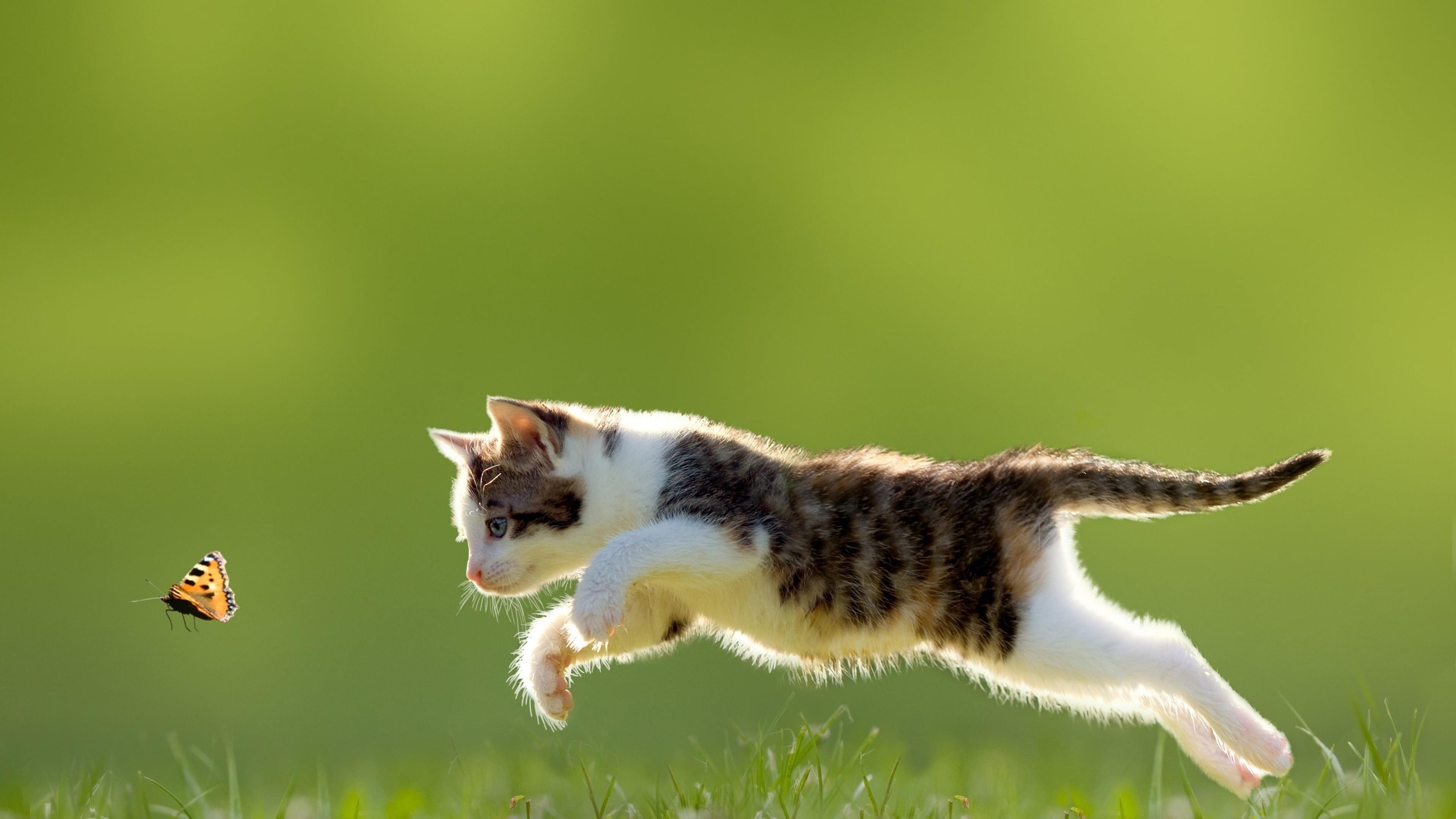 Белый и черный полосатый котенок кошка ребенок животные природа обои скачать