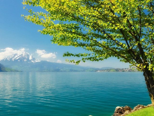 Зеленое лиственное дерево рядом со спокойным водоемом и пейзажным видом на горы под голубым небом природа