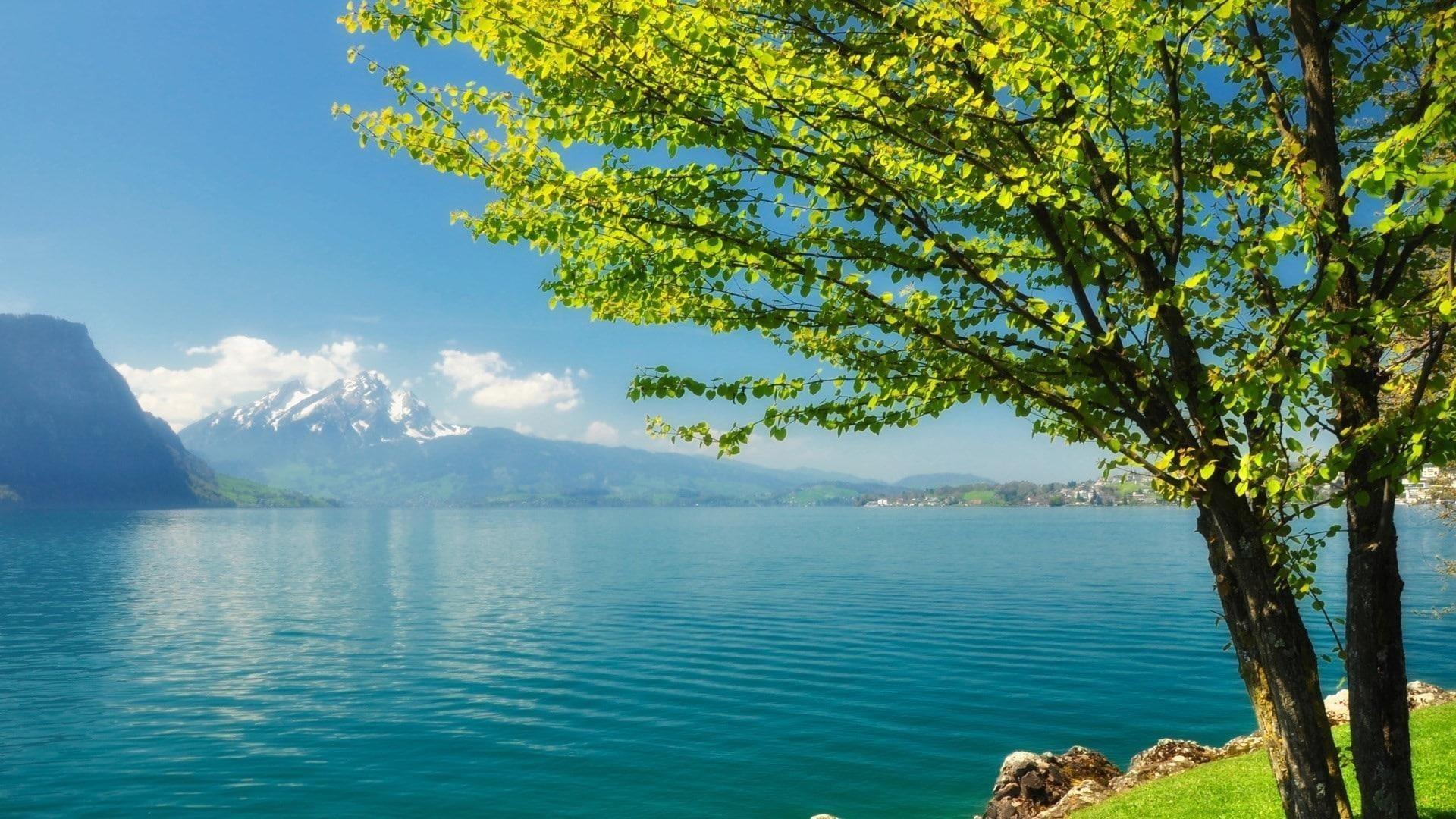 Зеленое лиственное дерево рядом со спокойным водоемом и пейзажным видом на горы под голубым небом природа обои скачать