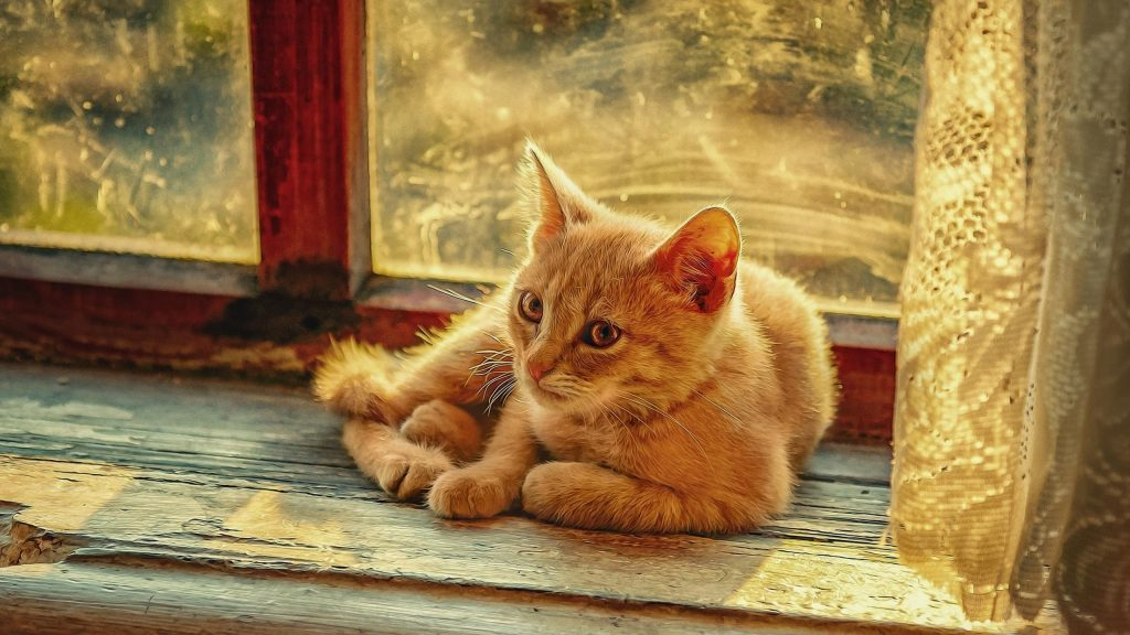 Светло-коричневая кошка сидит перед стеклянным окном кошки обои скачать