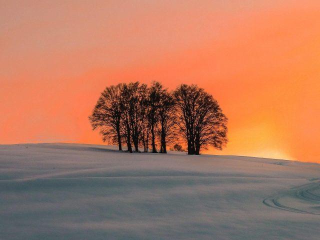 Полевые деревья во время заката природа