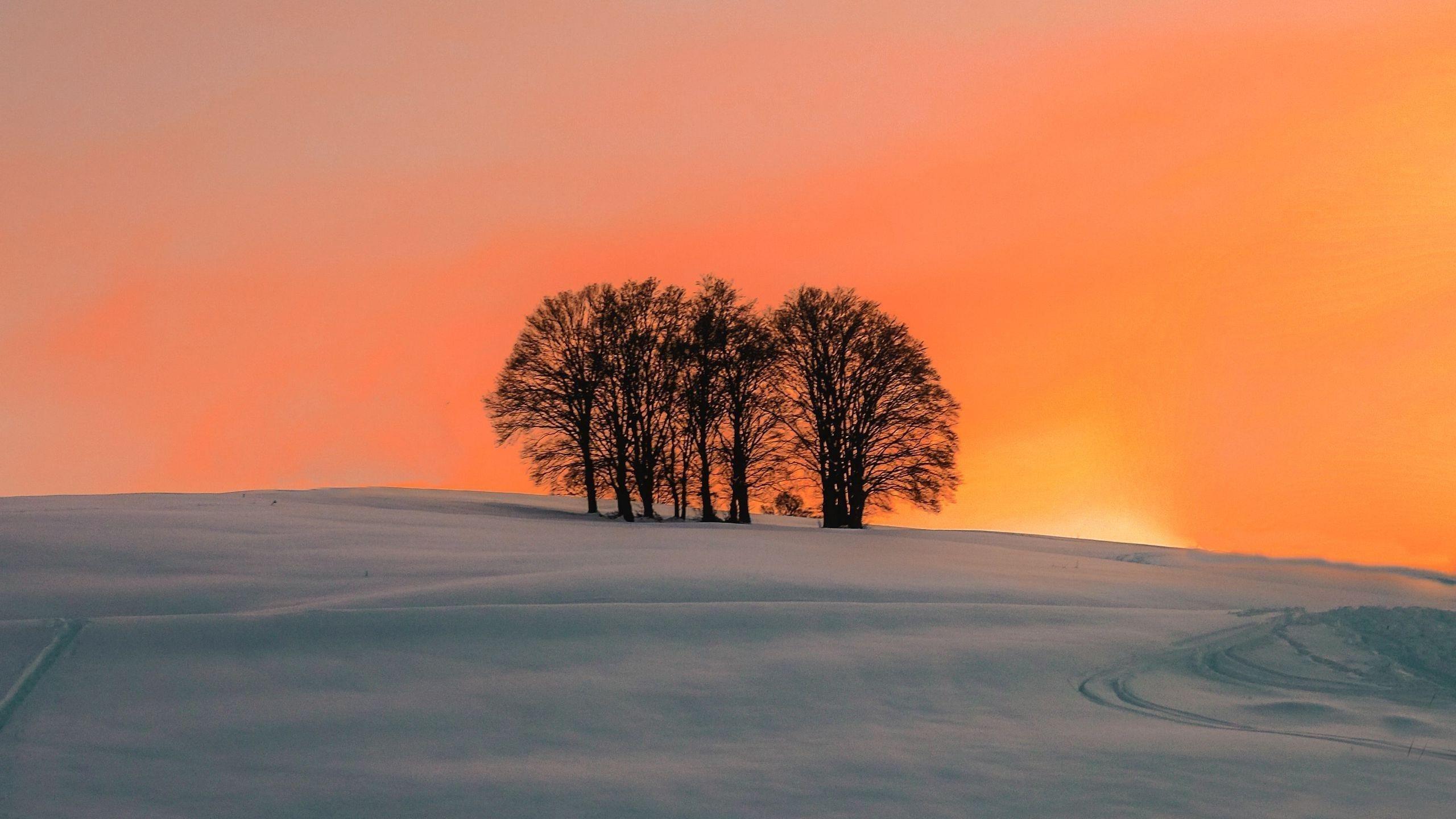 Полевые деревья во время заката природа обои скачать