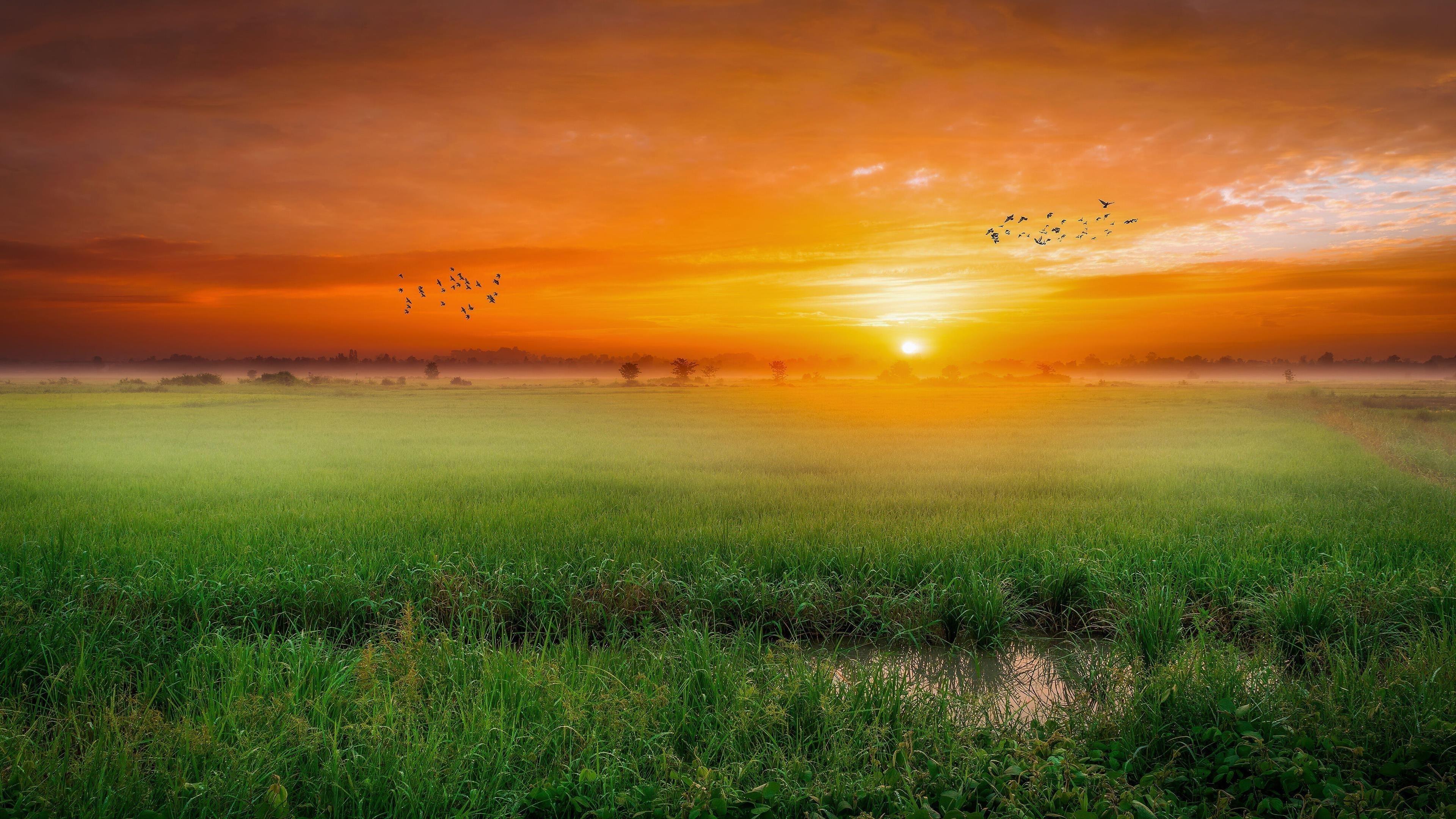 Зеленое поле с птицами во время заката природа обои скачать