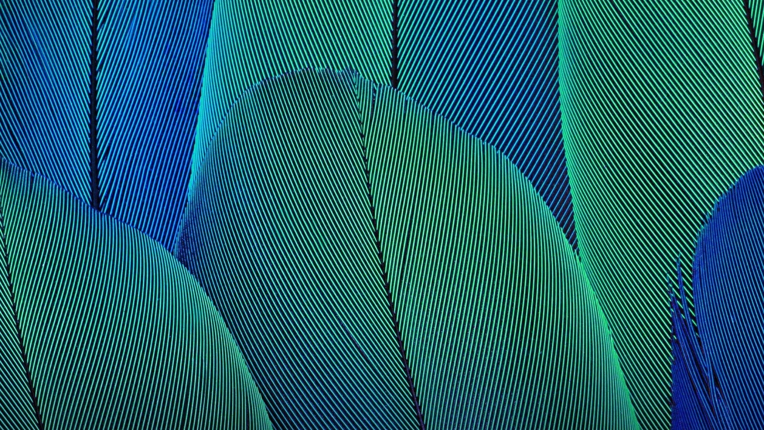 Абстрактные листья обои скачать