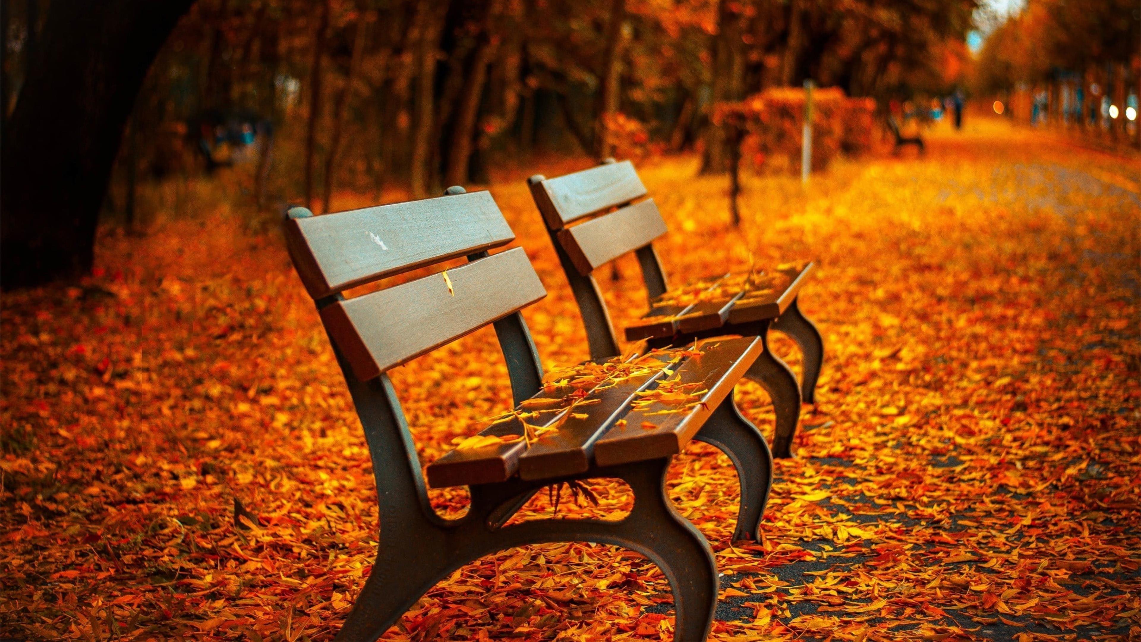 Две коричневые деревянные решетчатые скамейки опадают листьями обои скачать