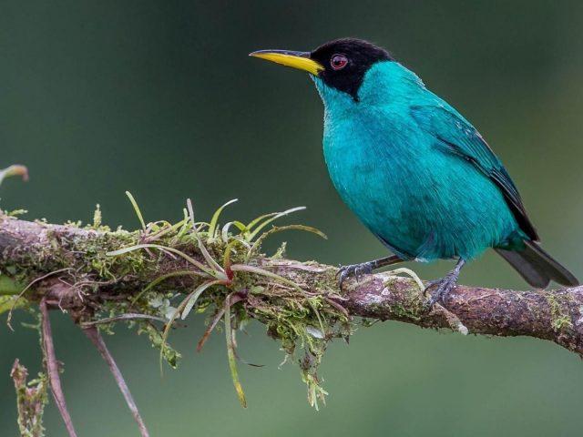 Синий сот садится на ветку дерева в дневное время птицы