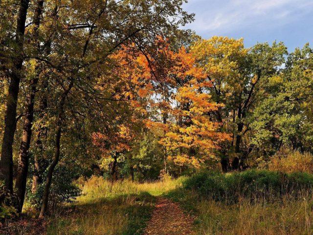 Желтый оранжевый зеленый осенние деревья зеленая трава поле под белыми облаками голубое осеннее небо