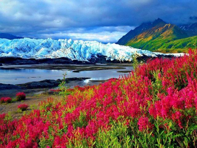 Весенние розовые цветы растение замерзшая река гора со снегом пейзаж вид на покрытые зеленью горы под голубыми облаками небо природа