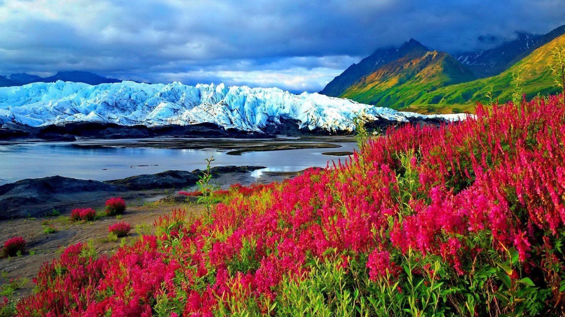 Весенние розовые цветы растение замерзшая река гора со снегом пейзаж вид на покрытые зеленью горы под голубыми облаками небо природа обои скачать