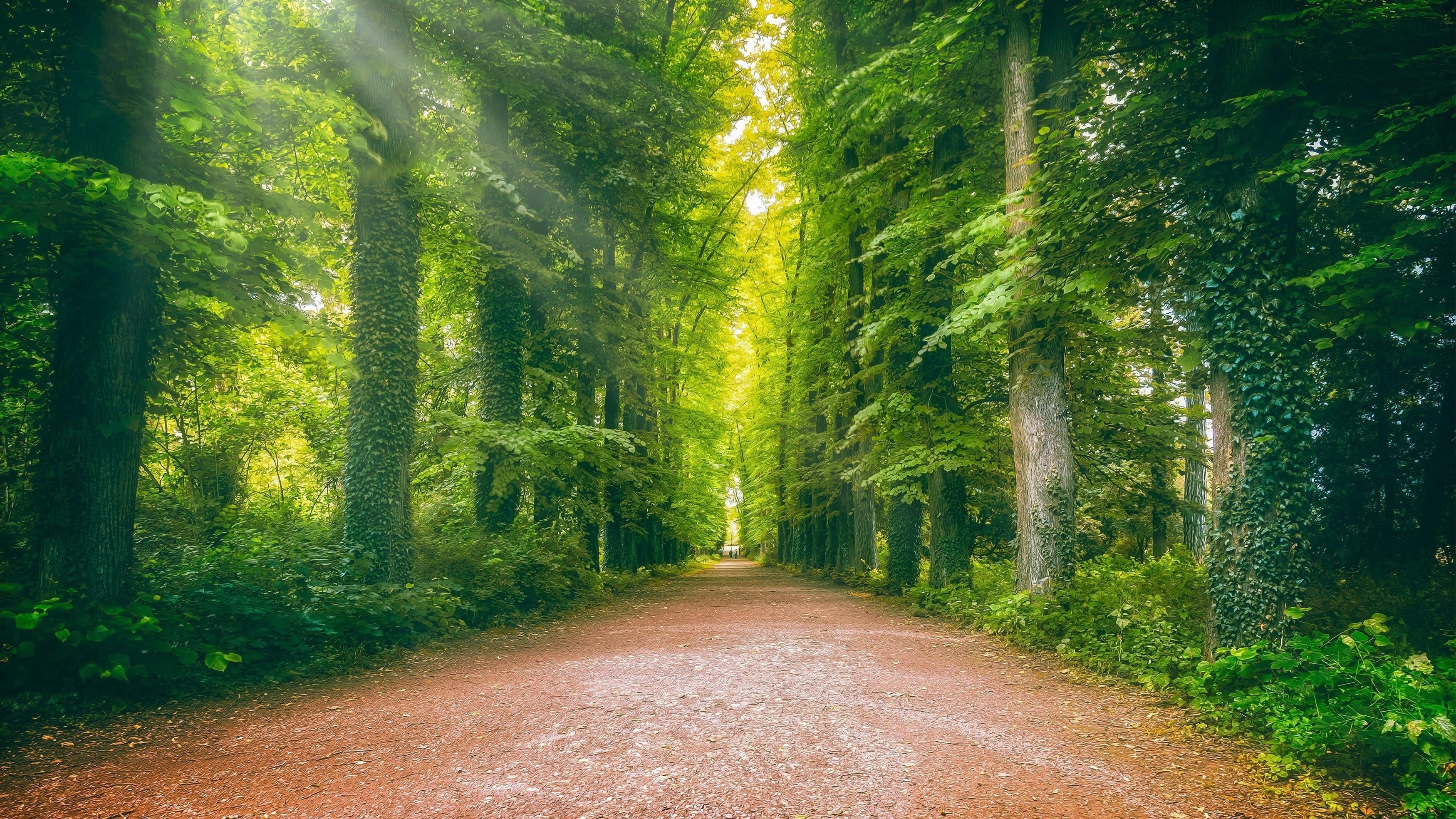 Дорога между плющом зеленью лесом природой обои скачать