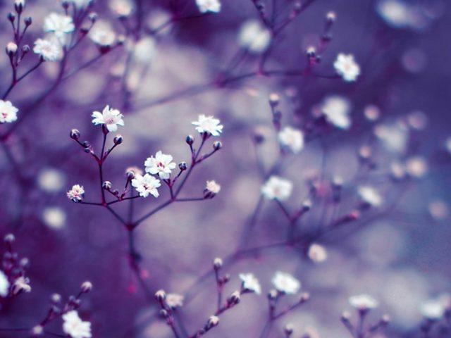 Белые цветы на светло-фиолетовом фоне природы
