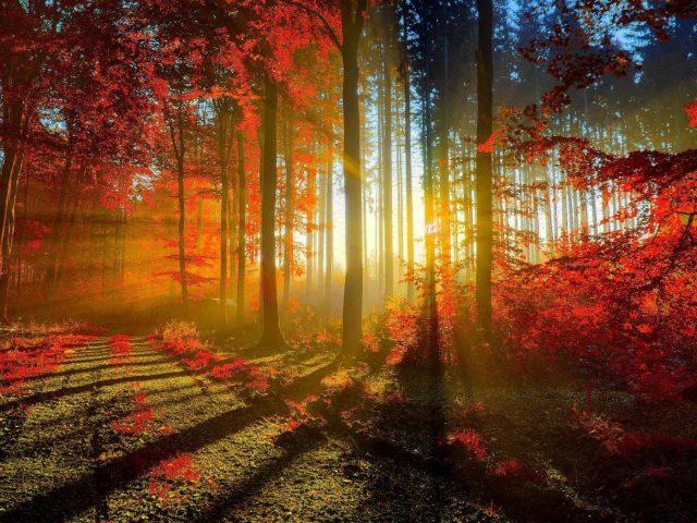 Фотография осеннего красного леса с солнечным лучом природы