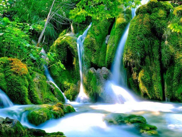 Водопады струятся между покрытыми водорослями скалами зеленые деревья кусты растения падают
