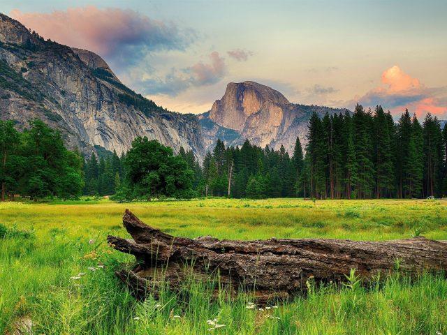 Ствол дерева на траве и пейзаж Вид на горы и деревья покрытый лес под облачным голубым небом природа