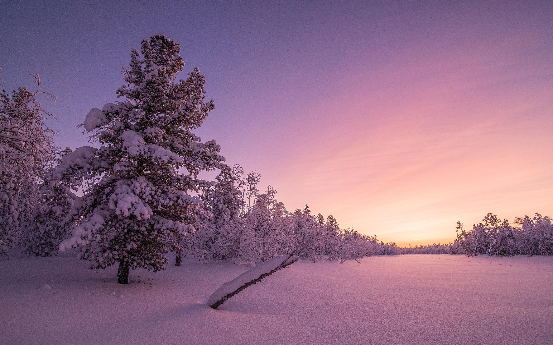 Frosty sunrise forest. обои скачать