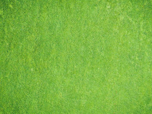 Текстура поверхности зеленая абстракция