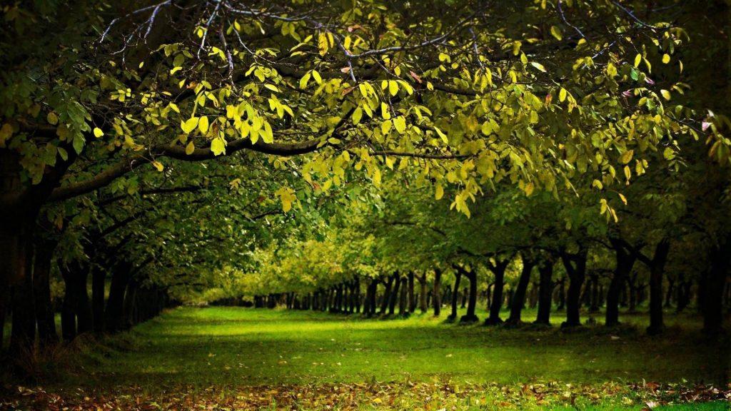 Покрытая травой земля между зелеными деревьями покрытая лесом природа обои скачать