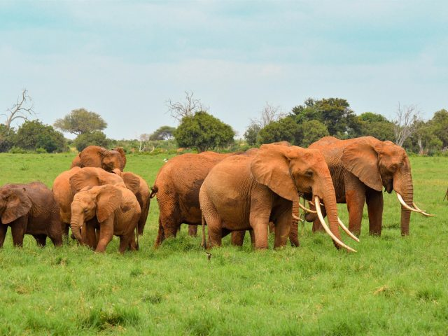 Слон всей семьей в лесу