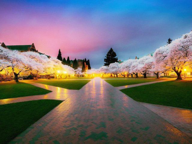 Парк вишневого дерева с желтой молнией под голубым и розовым небом природа