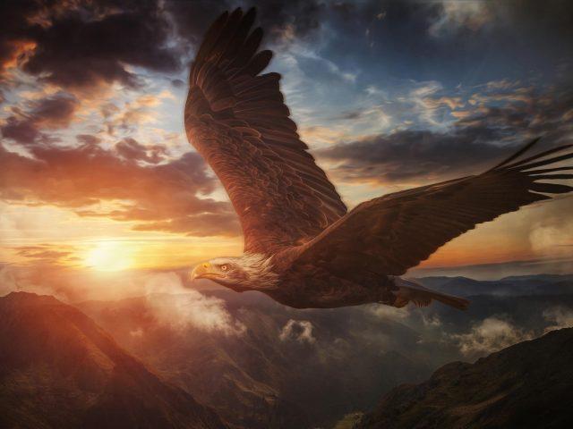 Животное белоголовый орел животные