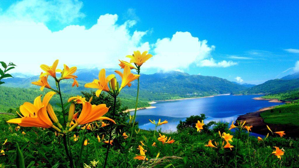Красивые пейзажи вид на водоем окруженный зелеными деревьями покрытые горы и крупным планом вид желтые цветы растения под голубым небом природа обои скачать