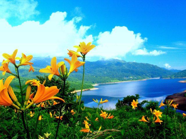 Красивые пейзажи вид на водоем окруженный зелеными деревьями покрытые горы и крупным планом вид желтые цветы растения под голубым небом природа