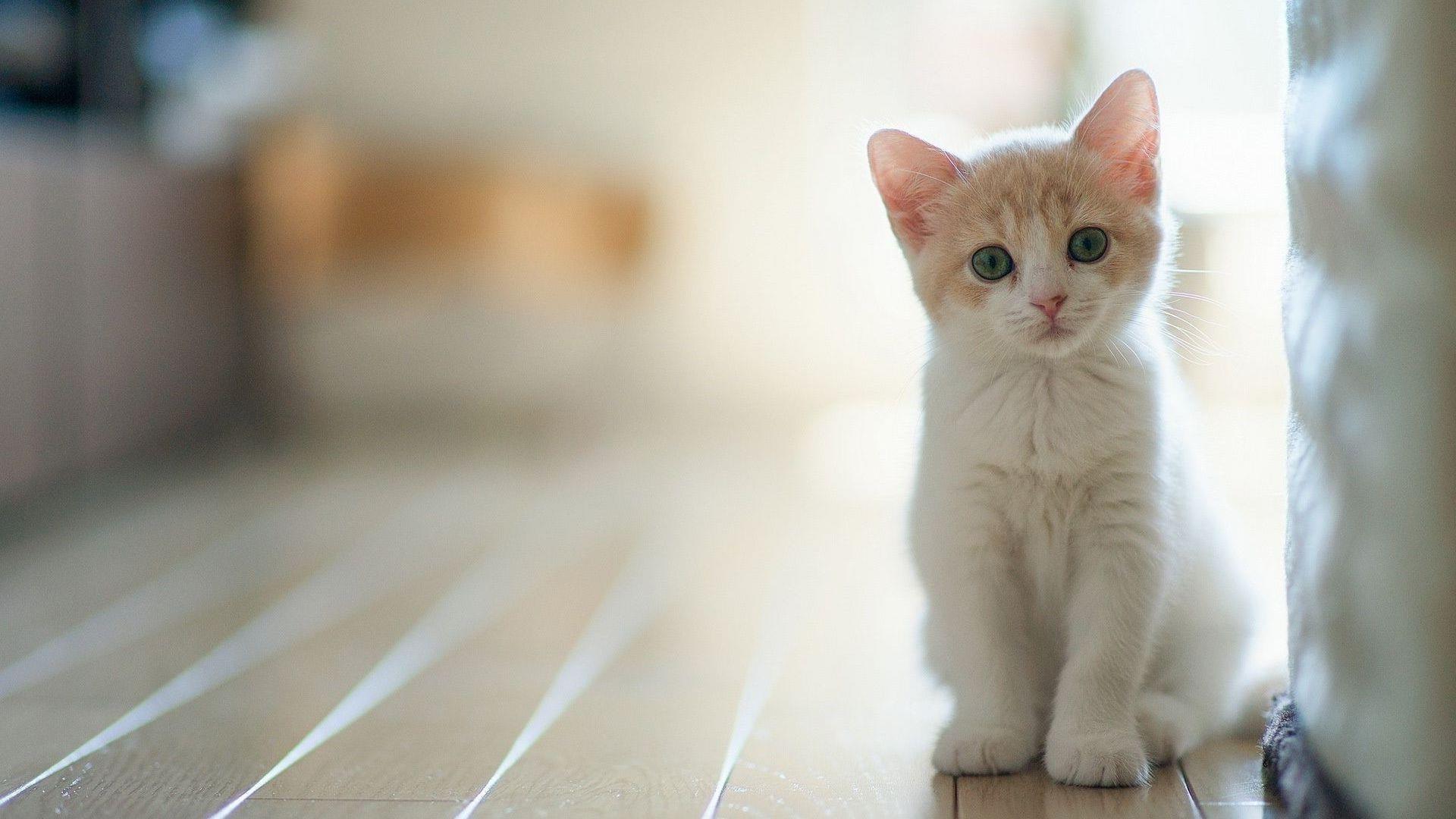 Белая кошка котенок сидит на полу возле белой стены котенок обои скачать