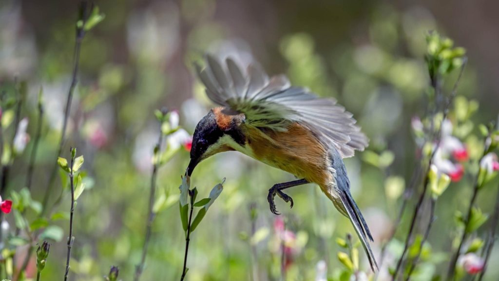 Колибри-это парящие птицы обои скачать